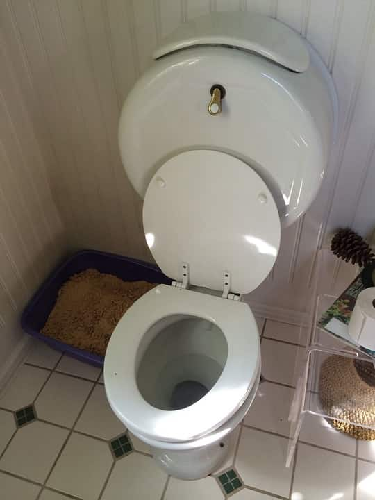 eldugult wc